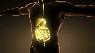 science anatomy of man body with glow digestive system