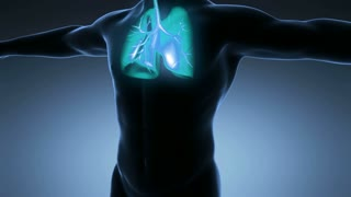 science anatomy of man body with glow lungs on blue