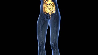 science anatomy of woman body with glow digestive system in blue. alpha channel