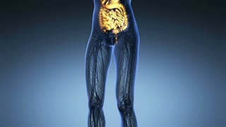science anatomy of woman body with glow digestive system in blue