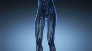 science anatomy of woman body with glow lungs in blue