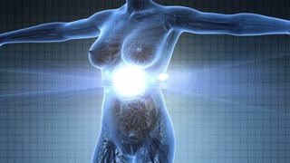 science anatomy scan of human body in x-ray with glow digestive system on blue