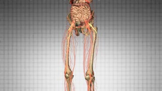 science anatomy scan of human body organs and bones