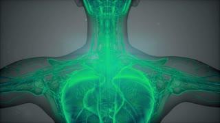 3D magnetic resonance image scan