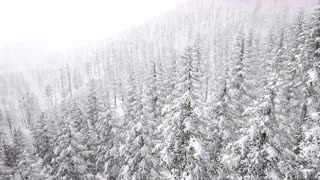 4K Aerial Snow Covered Trees Drone Footage Landscape Winter Nature
