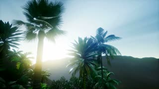 4k Amazing Sunrise at Palm Oil Tree Plantation. Aerial birds eye view. Thailand.