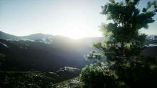 4k autumn pine trees above the mountain cliff