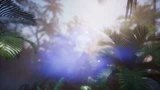 4k Dolly shot of a lush tropical jungle in a sun with coconuts, palm trees, and amazing natural lighting