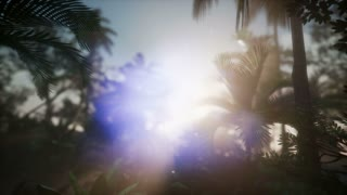 4k Dolly shot of a lush tropical jungle in a sun with coconuts, palm trees,