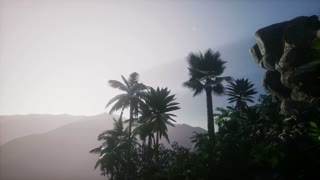 4k Mountain, field landscape with Palm trees. Jungle. Aerial view