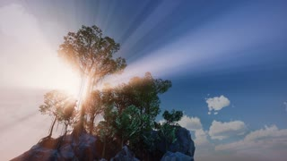 4k Pine forest tree by the sea