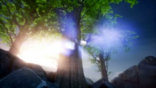 4k Sun beams through Trees at rock
