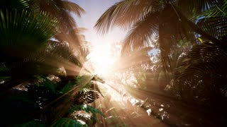 4k Tropical sunset. Palm tree at sunset sky. Silhouette of palm leaves