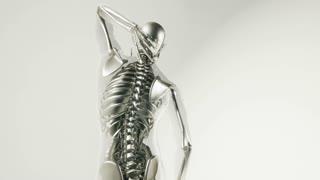 human skeleton bones model with organs