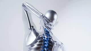 human spine skeleton bones model with organs