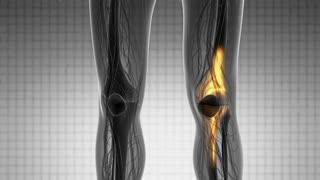 knee medical scan footage