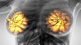 science anatomy of human body in x-ray with glow mammary gland