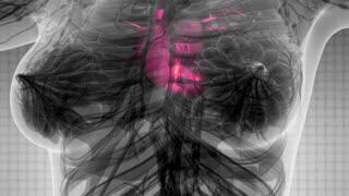 science anatomy scan of human heart glowing