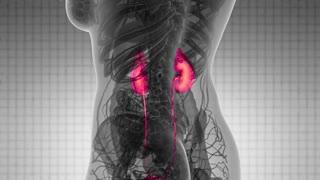 Science Anatomy Scan Of Human Kidneys Glowing