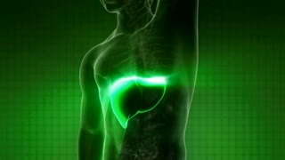 science anatomy scan of human liver glowing