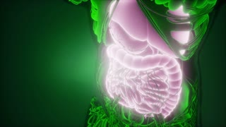 Science Anatomy Scan Of Woman Digestive System Glowing