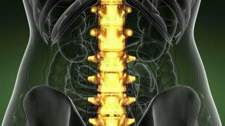 SPINE bone skeleton x-ray scan