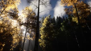 Sun Shining Through Pine Trees in Mountain Forest