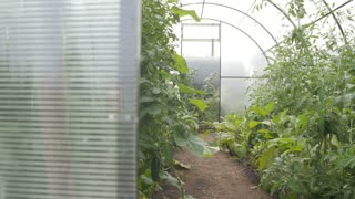 A small polycarbonate greenhouse inside