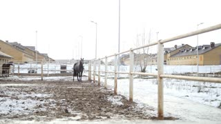 Black horse in the stable at winter day snorts steam from the nostrils