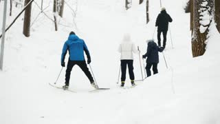Several people ride ski in snow forest