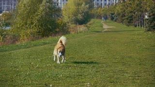 SLO MO Happy dog running