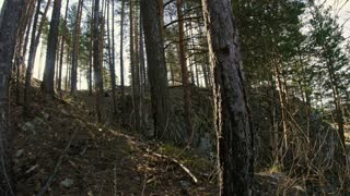 steep Bank of a mountain river, pine forest, sun through the trees, Ural, Siberia
