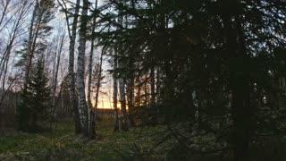 Sun breaking through trees