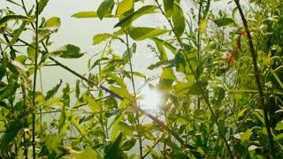 sun shines through the grass