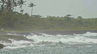 The pelican over extreme wave crushing coast, caribbean sea