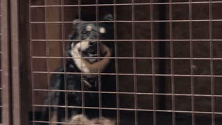 A homeless blck dog in cage at animal shelter - pooch