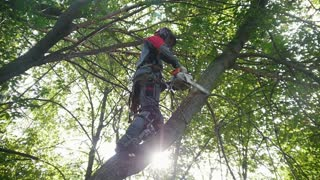 A man on a high tree sawing a chainsaw thin tree branches