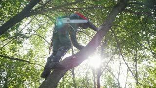 A man with a saw climbs a tree to start sawing a branch