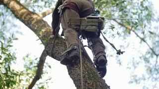 A strong man in a special suit with a chainsaw climbs a tree to cut branches