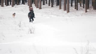 Blackhaired female rider riding a black horse through the drifts in the snowy forest