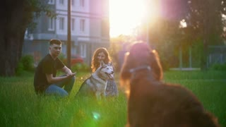 Dog breed irish setter running to young couple having a rest on the grass at summer sunset