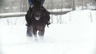 Equestrian sport - a horse walking in snowy field during snawfall