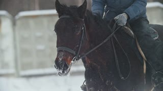 Equestrian sport - a horse with rider walking in snowy field during snawfall