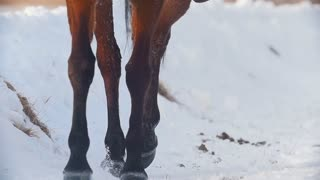 Equestrian sport - hooves of a horse galloping in snowy field