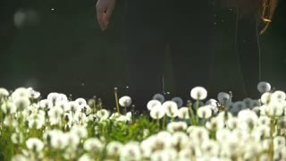 Female legs walking on the meadow of dandelions holding a blowball in hand