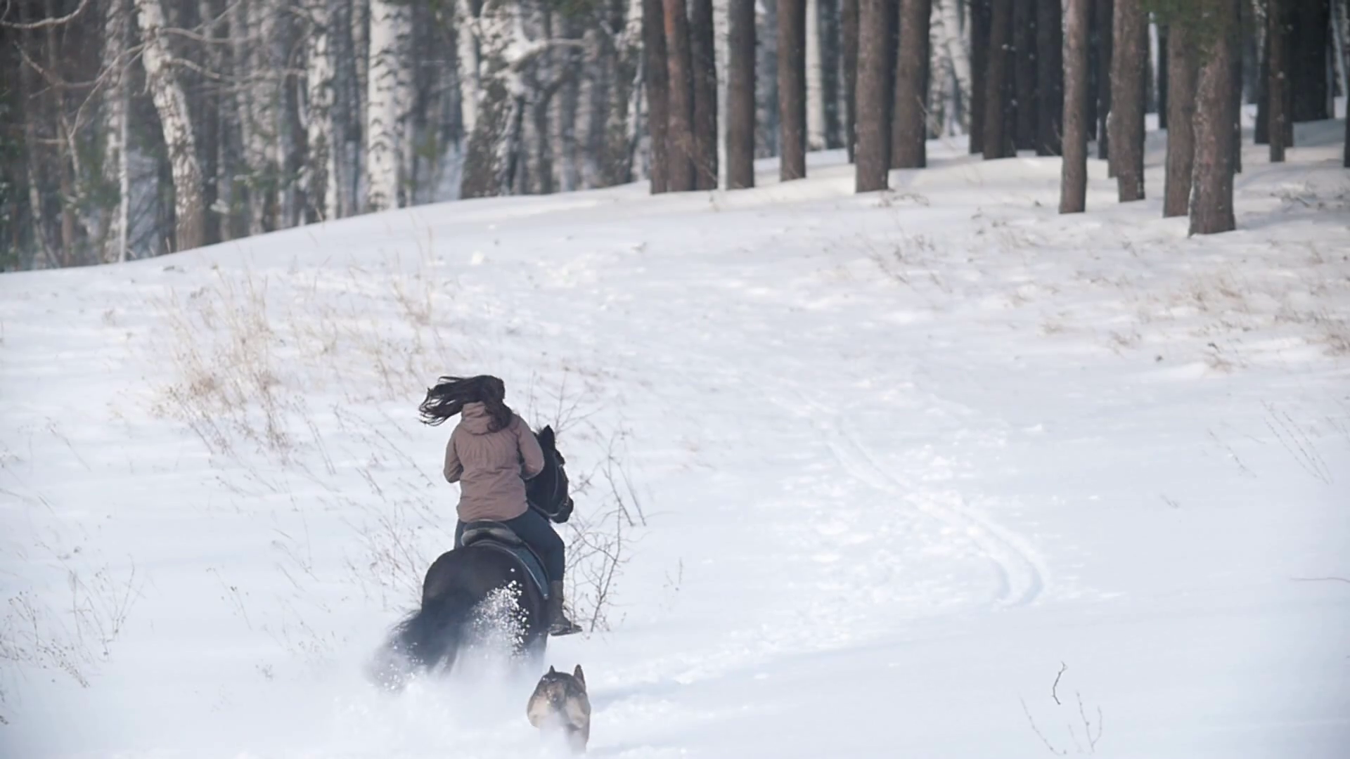 Female Rider Fast Riding Black Horse Through The Snow Dog Running Nearby Stock Video Footage Storyblocks