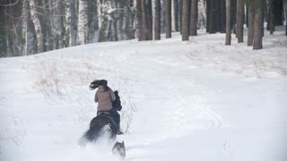 Female rider fast riding black horse through the snow, dog running nearby