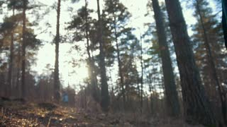 Hiker going through the woods with a flashlight