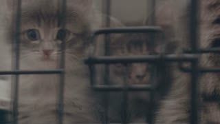 Homeless kitty in shelter cage waiting for adoption