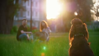 Irish setter sitting on the grass in front of couple who playing with their dog